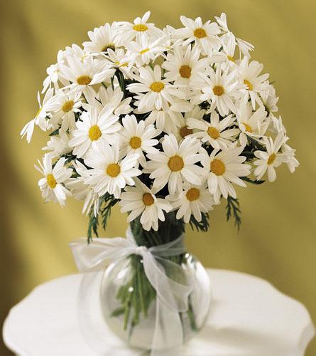 Natures Wonders Florist Daisies Daisy Vase C12 3005
