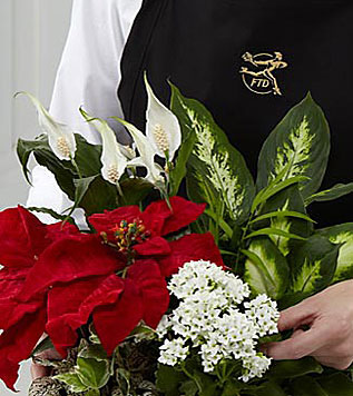 Natures Wonders Florist Business Gifts Florist Designed Holiday